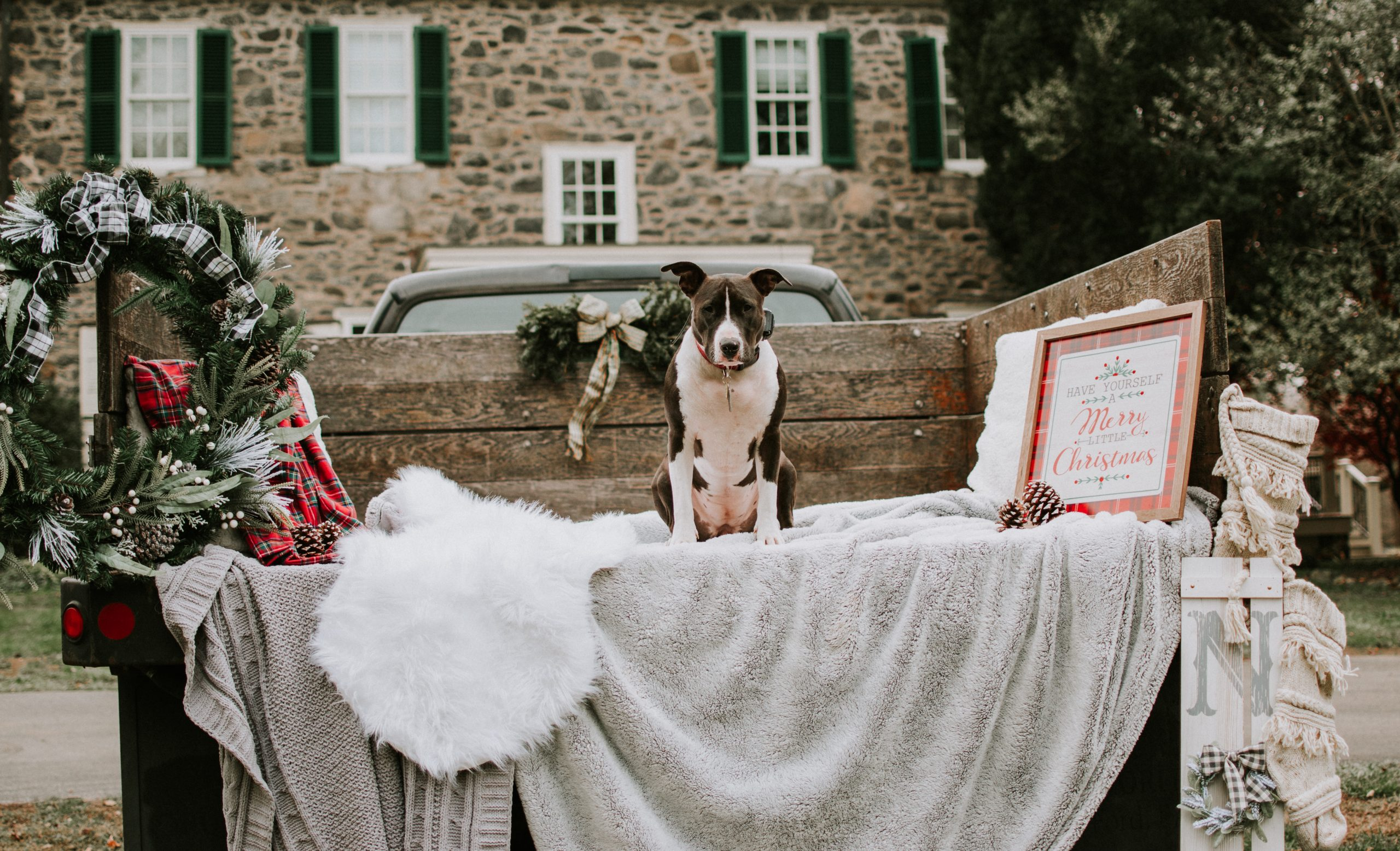 Photo of a dog on a trailer decorated for Christmas at Grace Winery